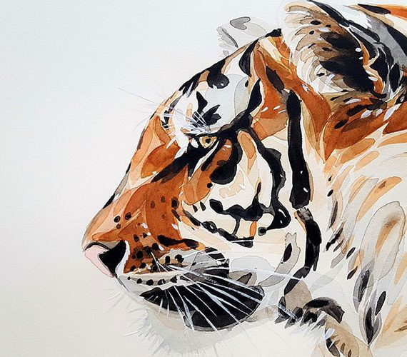 Tiger is the king of wild