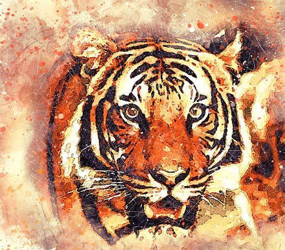 Wildlife tiger photography